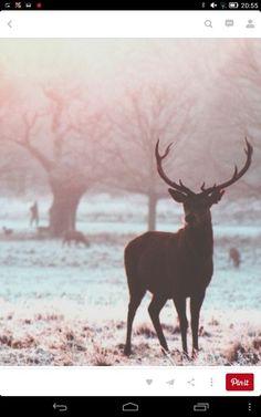 Beautiful deer.