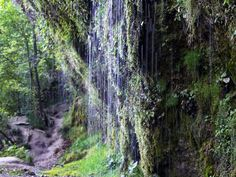 Austria, Waterfall, World, Plants, Travel, Outdoor, Beautiful, Blog, Nature Reserve