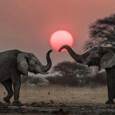 Courtesy of @ingwe911 Admins: @takemyhearteverywhere Kalahari Desert, Botswana  Ta - travellingthroughtheworld