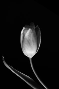 Flowers Monochrome Photography, Black And White Photography, Atticus, Romania, Sword, Knight, Flowers, Image, Style