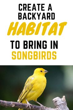 Create a backyard habitat to bring in hundreds of songbirds daily. Simple ideas for giving birds exactly what they need to come back year round. Best Picture For phoenix bird For Your Taste Funny Bird, What Is A Bird, How To Attract Birds, Bird Food, Backyard Birds, Bird Watching, Beautiful Birds, Bird Houses, Backyard Landscaping