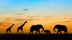 Safari- Torally reminds me of The  Lion King! Nnnnnaaaaasemonyabadabetebaba It's the circle if life!!!!