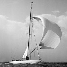 The British America's Cup 12 metre yacht Sceptre, racing under spinnaker during Cowes Week regatta