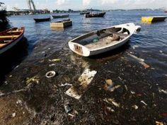 Olympic sailors looking to compete in the 2016 Summer Games have voiced concerns over sewage-infested waters swamped with rubbish and human waste in Rio de Janeiro's Guanabara Bay, where the Olympic sailing and windsurfing events will take place. Olympic Sailing, Tourism Development, Dead Dog, Rio Olympics 2016, Summer Olympics, Environmental Pollution, Water Pollution, Rio 2016