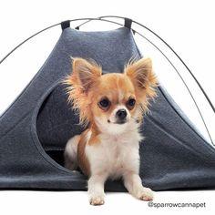 Sommerzeit=Campingzeit - auf die Zelte fertig los=) #sparrowbrands #cannapet #zelte #katzeimzelt #cbd #sommerzeit Camping, Corgi, Pets, Animals, Instagram, Summer Time, Tent Camping, Campsite, Animals And Pets