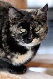 Look at Dancer's beautiful markings! Please take the time to read her page to see if your family or another family you know would be her perfect forever home. Please spread this around.