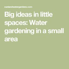 Big ideas in little spaces: Water gardening in a small area