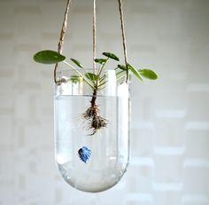 Aquascape & Pilea peperomioides. #pileapeperomioides #aquascape
