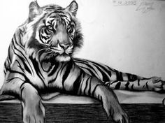 tiger woods ( a tiger shaping woods ) just for fun.how many tigers are in this scene? can u locate them? The Sleeping Tiger Tiger Sketch, Tiger Drawing, Small Wild Cats, Big Cats, Unalome, Animal Drawings, Art Drawings, Sleeping Tiger, Samurai