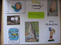 Backyard Birds Lap ~n~ Note by Ami Brainerd at Homeschool Share