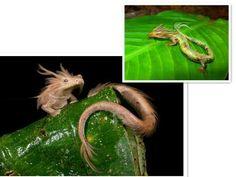 Finger Dragon photo - made in Aviary - photo editor   Photo Real ...