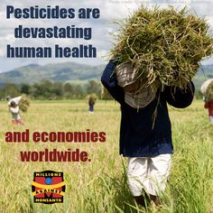 Big Ag's chemicals aren't just making us sick. They're making the world's economy sick, too. Learn more: http://orgcns.org/1DbRjZc #Economy #Health #MonsantoMakesMeSick