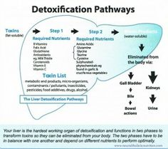 Liver detox pathways diagram one item missed in protective liver detox pathways diagram one item missed in protective nutrients n acetyl cysteine a liver repairer used by hospitals ccuart Choice Image