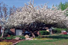 20 Best Small Landscaping Trees Images On Pinterest
