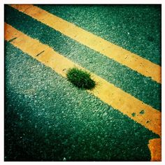 Grass Patch by Henry Sene Yee