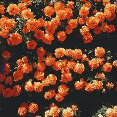 #Flowers #Flower #Flowerarrangements #Spring #Centrepiece #Colour #Event #Cute #Pretty #naturelovers #beautiful #arrangement #tablecenterpiece #eventflowers #blooms #florals #floraldesign #softcolors #flowerphotography #fun #love #party