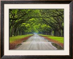 Wormsloe Plantation, Savannah, Georgia, USA Photographic Print by Joanne Wells at Art.com