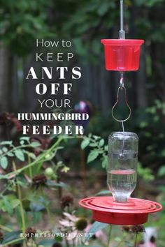 How to make a hummingbird feeder moat to keep ants away from the sugar water. Hummingbird Food Diy, Hummingbird Nectar, Hummingbird Plants, Diy Bird Feeder, Humming Bird Feeders, Humming Birds, How To Attract Birds, How To Attract Hummingbirds, Carpe Diem