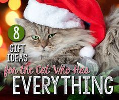 It's that time of year again…the time of year when cat slaves around the globe spend hours pondering what to buy for their spoiled cat…the cat who has everything! Not to worry - we did the research for...