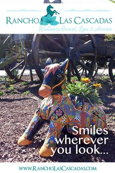 Horse Smiling, Wellness Resort, Guest Ranch, Mexico Vacation, Mexican Art, Make New Friends, Horseback Riding, Horses, Ranch