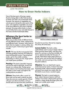 Urban Farmer offers several herb seed varieties for home gardens and farmers. Grow basil, cilantro, dill & more. It's easy to grow fresh garden herbs. Herb Garden, Garden Plants, Indoor Plants, Indoor Herbs, Growing Green Beans, Growing Herbs, Container Gardening, Gardening Tips, Greenhouse Gardening