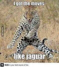 I got the moves like jaguar, I gotta the moves like jaguar.....