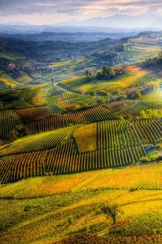 Langhe, province of Cuneo, region of Piedmont, Italy.  Famous for its wines, cheeses and white truffles of Alba.