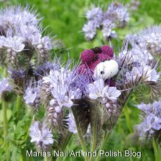 """In Danish this plant is called honningurt, in Latin phacelia tanacetifolia and in English it seems to be called: lacy phacelia,blue tansyorpurple tansy. There was something """"Sparkly"""" in the middle of it, I wonder what that is..?"""