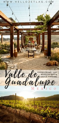 Valle de Guadalupe is an up and coming wine region located in Mexico's Guadalupe Valley. Ensenada Baja California, Ensenada Mexico, Ensenada Cruise, Mexico Vacation, Mexico Travel, Italy Vacation, Holidays To Mexico, Visit Mexico, Romantic Vacations