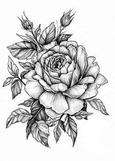 25 Beautiful Flower Drawing Information & Ideas - Zeichnungen - Tatoo Ideen Rose Drawing Tattoo, Tattoo Sketches, Tattoo Drawings, Rose Drawings, Pencil Drawings, Botanical Drawings, Pencil Tattoo, Drawing Drawing, Drawing Faces