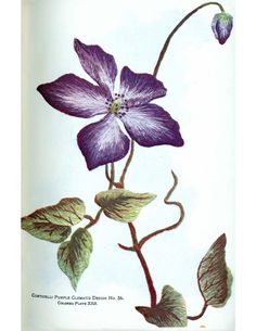 corticelli purple clematis embroidery