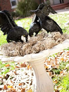 Halloween decoration. This would be a great use for planters; thanks to the drought nothing is alive!
