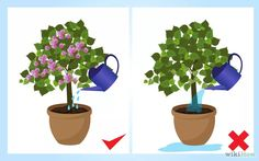 Aprende a cultivar bugambilia vía es.wikihow.com