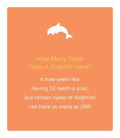 dental fun facts 2013 - Google Search