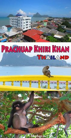 A quiet town with a beautiful beach, stunning geography, a protected species of monkey (the sweetest monkeys you'll ever meet), and a temple full of macaques on sinister-sounding Monkey Mountain. I cover all the things to see and do that make Prachuap Khiri Khan a great place to visit. #bbqboy #Prachuapkhirikhan #thailand #travel