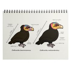 Yellow-headed Greater v Lesser Vulture Notebook