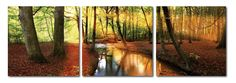 Forest Oasis Mounted Photography Print Triptych