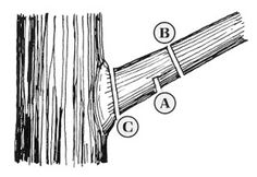 faq's Q. I am a beginner at pruning. Any basic tips? When do I prune flowering shrubs? It's so confusing. [read more…]Q. I am a beginner at pruning. Any basic tips? When do I prune flowering shrubs? It's so confusing. [read more…] Garden Yard Ideas, Garden Trees, Garden Shrubs, Flowering Shrubs, Trees And Shrubs, Farm Gardens, Outdoor Gardens, Bonsai, Tree Trimming Service