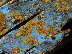 Coque de bateau - lichen - ile d'Arz