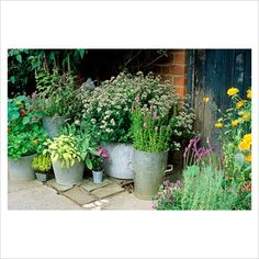GAP Photos - Garden & Plant Picture Library - Metal container plantings - GAP Photos - Specialising in horticultural photography