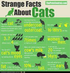 Cat facts. Thanks @Amanda Austin!