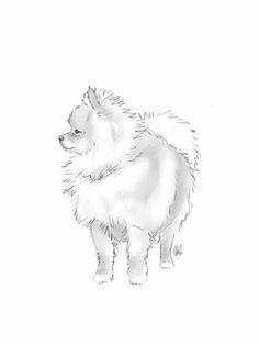 English Print Brown Pomeranian Dog Standing Art Picture
