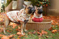 Passende Hundebekleidung für Französische Bulldoggen zu finden ist schwer. Sie sind zu breit und zu kurz für Hundekleidung von der Stange und selbst bei Kleidung, die extra für Bulldoggen hergestellt wird, gibt es oft nur eine universelle Größe, die dann einer 8kg Bulldogge ebenso passen soll wie einem 18kg Exemplar. Da bleibt einem fast nichts anderes übrig, als sie selbstzunähen. …