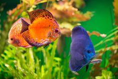 Aquarium Fish Food, Planted Aquarium, Tropical Colors, Tropical Fish, Fish Breeding, Freeze Drying Food, Water Pollution, Fishing Pictures, Saltwater Tank