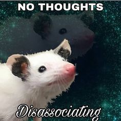 Funny Animals, Cute Animals, Mother Birthday Gifts, Opossum, Wholesome Memes, Reaction Pictures, Tea Mugs, Cat Memes, Haha