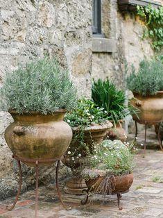 Pot Plante, Dream Garden, Garden Inspiration, Backyard Landscaping, Garden Pots, Beautiful Gardens, Container Gardening, Outdoor Gardens, Planting Flowers