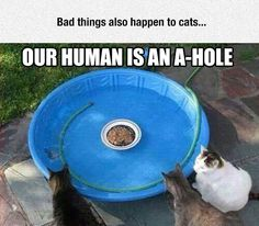 Someday Cats Will Make Humans Pay