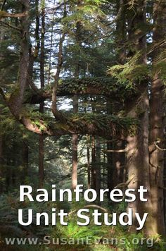 Free Rainforest Unit Study (includes videos, crafts, and activities)
