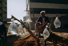 A man sells goldfish in baggies tied to a tree branch in Beirut, Lebanon, February 1983.  Photograph by W. E. Garrett, National Geographic (via crashingly beautiful)