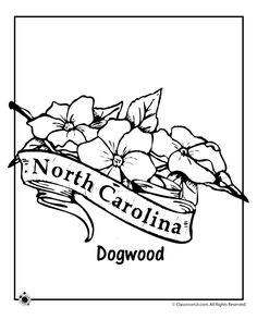 state flower coloring pages north carolina state flower coloring page classroom jr